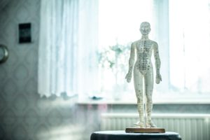 Acupuncture Body Model